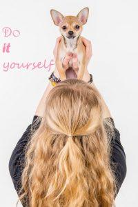 Chihuahua_Do it yourself_DIY